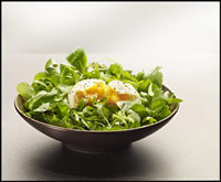 FROZEN EGG-BASED PRODUCTS - FROZEN POACHED EGGS Chilled poached egg// poached egg manufacturer