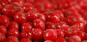 IQF FROZEN CURRANTS -